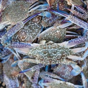 Blue Swimming Crab (3/5 count)