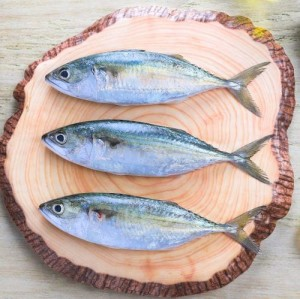 Bangda/Ayala/Indian Mackerel (6/10 Count)