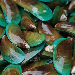 Whole Green Mussels or Clam (500gm Pack) *NEW*
