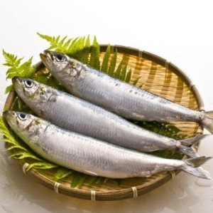 Sardine or Mathi (8-12 Count)
